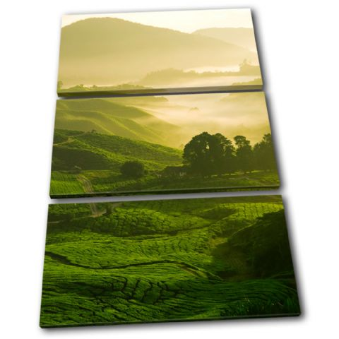 Field Nature Green Landscapes - 13-0048(00B)-TR32-PO